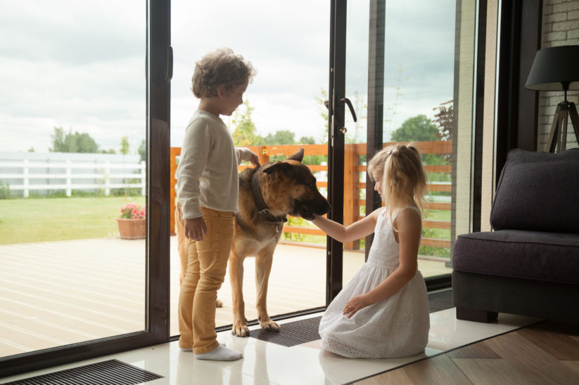 Hofhund Hof-Hund Hund